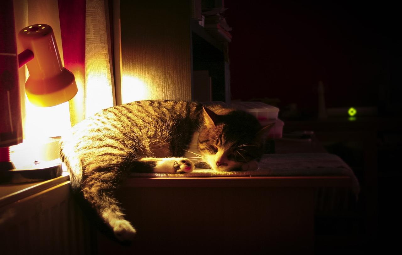 無理に我慢せず食べてから眠るの画像